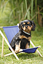 Cavalier King Charles spaniel puppy sitting in miniature deck chair on a meadow - HTF000474