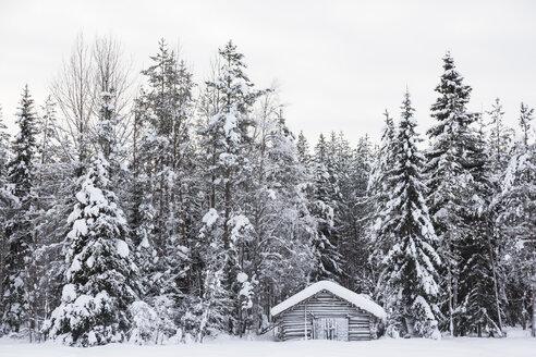 Scandinavia, Finland, Kittilaentie, Wooden hut in the forest, Winter - SR000607