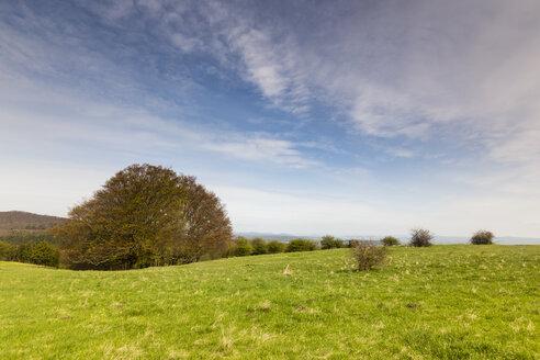 Germany, Hesse, landscape at Hoher Doernberg - SRF000643