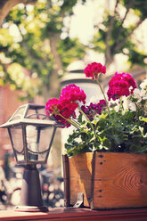 Flower box - MEMF000256