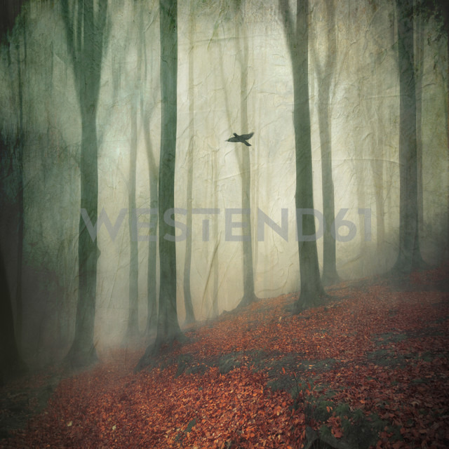Forest on a misty day - DWI000115