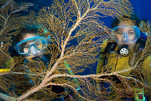 Palau, Pacific Ocean, two scuba divers behind knotted fan coral - JWAF000159
