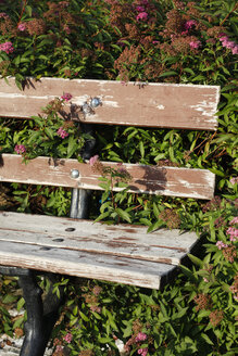 Part of a weathered wooden bench with blossoming plants in the background - JT000559
