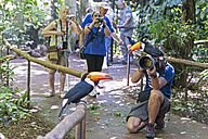Brazil, Mato Grosso, Mato grosso do Sul,  common toucan, Ramphastos toco, sitting on camera of a photographer while taking a picture - FO006611