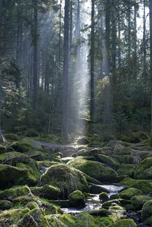 Germany, Bavaria, Lower Bavaria, Bavarian Forest, Waldkirchen, Saussbach gorge and sun beam - LB000781