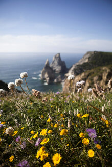 Portugal, Sintra, Praia da Ursa, flowers at the coast - FAF000015