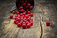 Red currants, Ribes rubrum, on dark wooden table - LVF001606