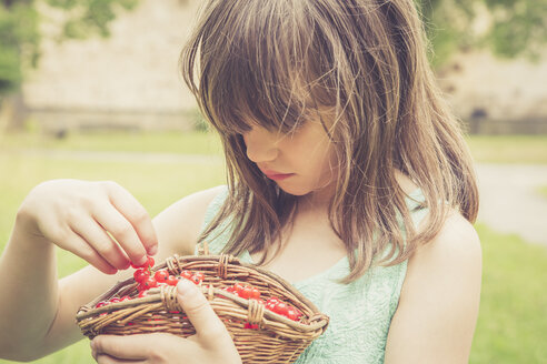 Little girl holding basket of red currants - LVF001621