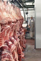 Pig carcasses in a slaughterhouse - LYF000212