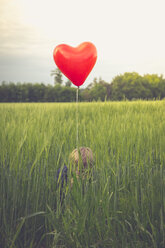 Little boy with red heart-shaped balloon hiding in a field - SARF000733