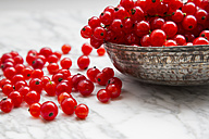 Metal bowl of red currants, Ribes rubrum, on white marble, partial view - LVF001653