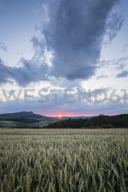 Germany,  Baden-Wuerttemberg, Constance district, view to Hohenstoffeln with barley field in the foreground - ELF001200