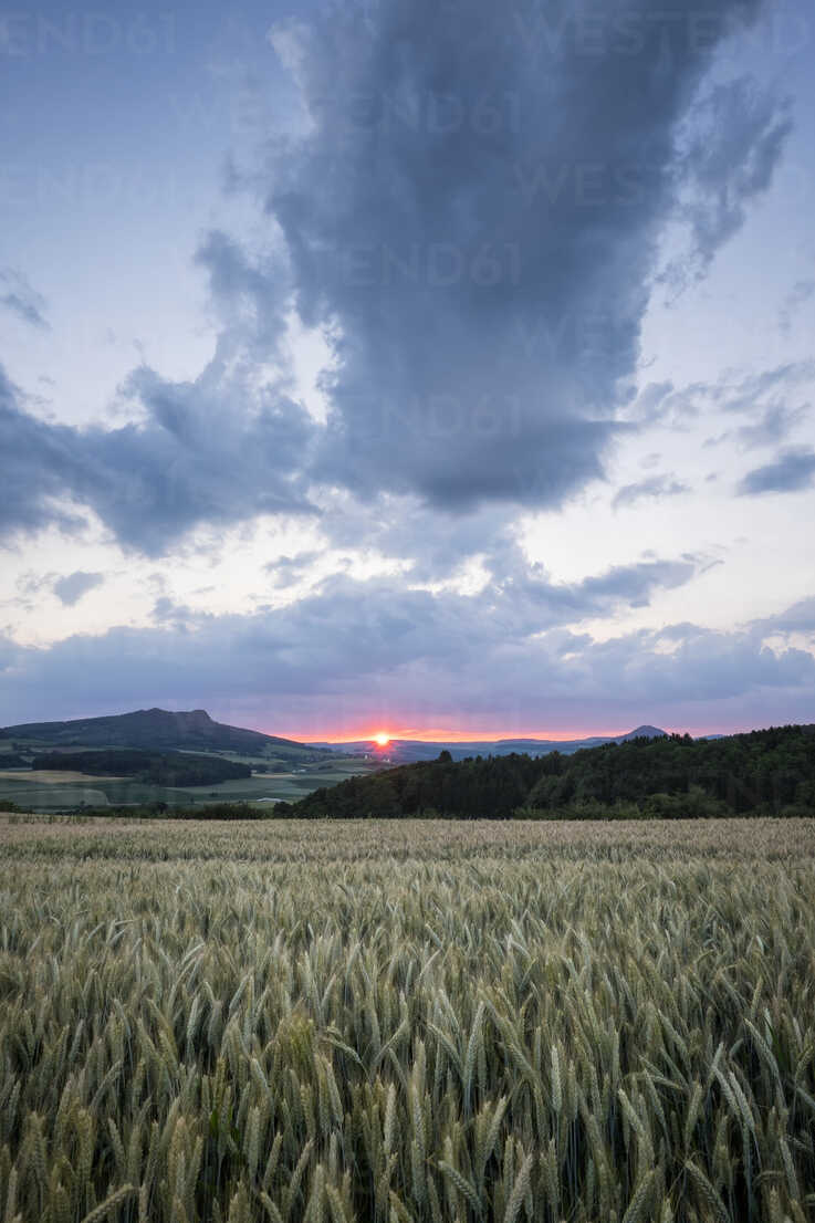 Germany,  Baden-Wuerttemberg, Constance district, view to Hohenstoffeln with barley field in the foreground - ELF001200 - Markus Keller/Westend61
