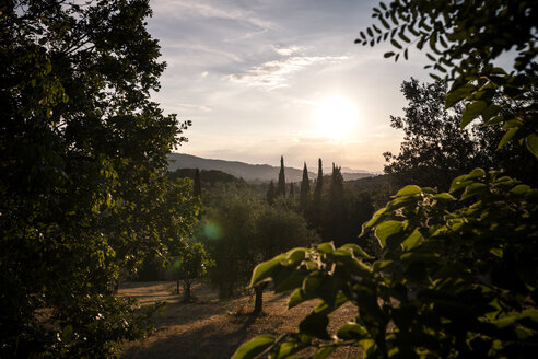 Italy, Tuscany, landscape at sunset with olive trees and cypresses - SBDF001073
