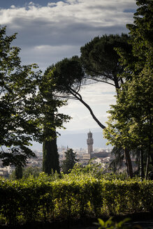 Italy, Tuscany, Florence, pine trees and tower of Palazzo Vecchio - SBDF001092