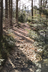 Germany, Bavaria, forest track in sunlight - STB000192