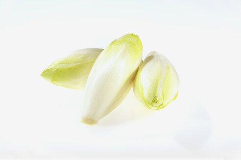 Chicory, Cichorium intybus, on white background - CHF000077