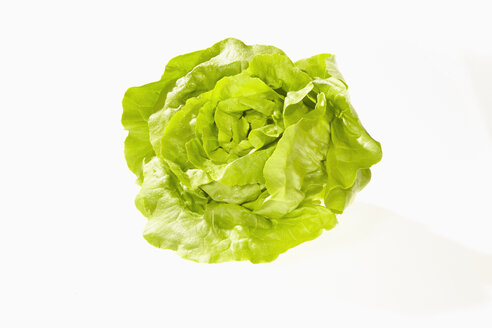 Butterhead Lettuce, Lactuca sativa var. capitata, on white background - CHF000080