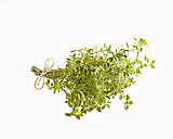 Bunch of lemon thyme, Thymus citriodorus - CHF000087