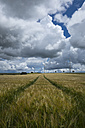 Germany, Constance district, cloudscapes over barley field, Hordeum vulgare - ELF001237