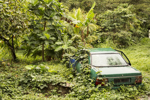 Caribbean, Antilles, Lesser Antilles, Trinidad and Tobago, Tobago, Rainforest, grown over car - SK001573