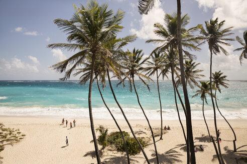Caribbean, Antilles, Lesser Antilles, Barbados, - SK001589