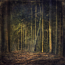 Germany, near Wuppertal, Forest glade in a coniferous forest, Textured effect - DWI000129