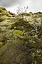 Iceland, Skaftareldahraun, Lava field - FCF000301