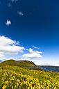 Iceland, Skutustadir, Krafla-volcanic area, Myvatn, pseudocrater - FCF000306