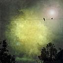 Pigeons on power line - LVF001727