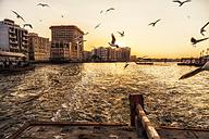 United Arab Emirates, Dubai, Dubai Creek - DAWF000082