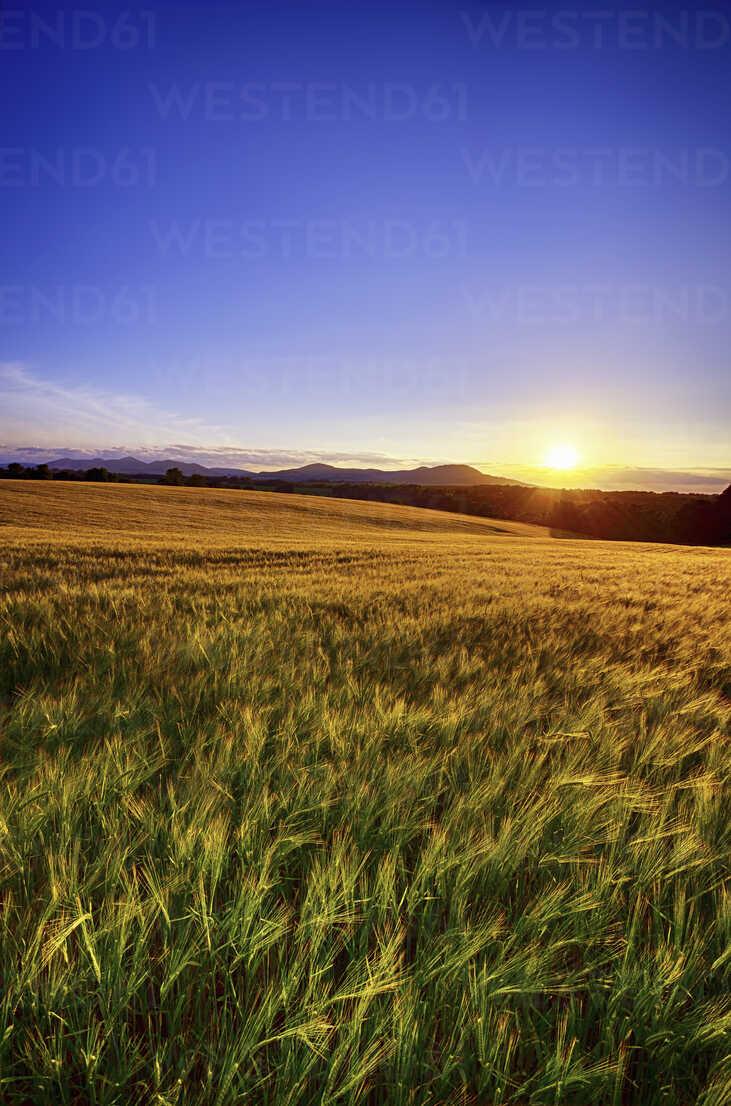 United Kingdom, Scotland, Midlothian, Barley field, Hordeum vulgare, at sunset - SMAF000238 - Scott Masterton/Westend61