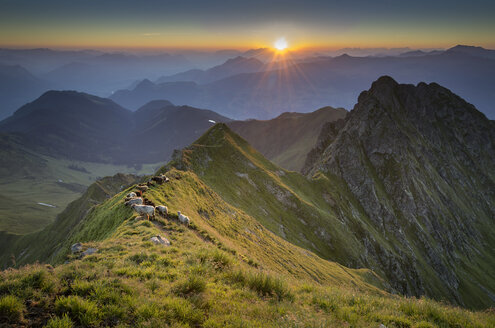 Austria, Tyrol, Schwaz district, View from Kellerjoch at sunrise against the morning sun, Sheep - MKFF000049