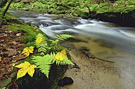 Germany, Saxony, Saxon Switzerland, waterside of Kirnitzsch River - RUEF001267
