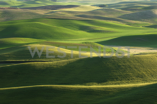 USA, Washington State, aerial view to fields and green hills of Palouse - RUEF001283