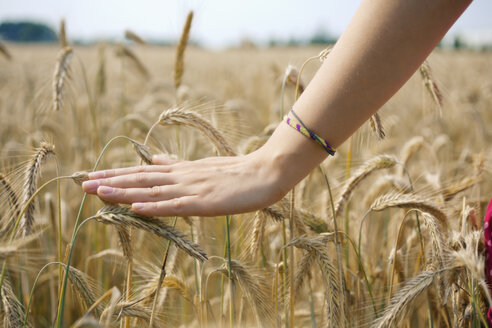 Hand of a young woman touching spikes in a grain field, close-up - SEF000815