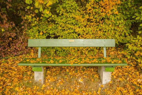 Germany, Baden-Wuerttemberg, bench covered with autumn leaves - WGF000406