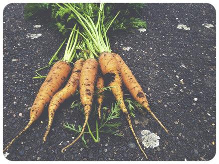 Carrots in garden - SHI000023