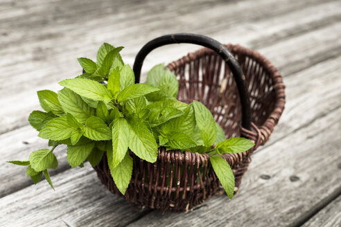Wickerbasket of fresh peppermint - FCF000403