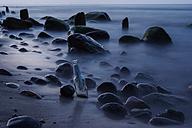 Germany, Mecklenburg-Western Pomerania, Ruegen, Message in a bottle at beach - PAF000734