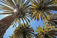 South America, Peru, Tropical palms against the blue sky and sun - KRPF000807