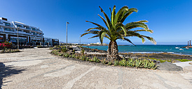 Spain, Canary Islands, Lanzarote, palm tree at Costa Teguise - AMF002677