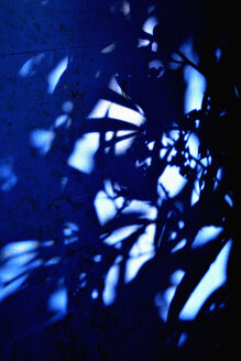 Shadows of plants on a wall in a blue light - AX000722
