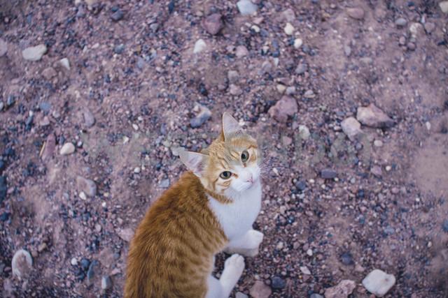 Jordan, red cat - FLF000485