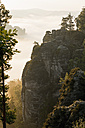 Germany, Saxony, morning mist at Elbe Sandstone Mountains - MSF004130