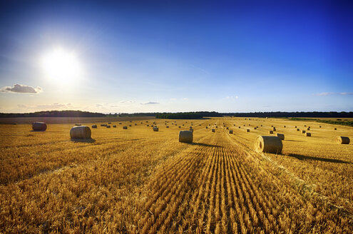 United Kingdom, Scotland, East Lothian, Field, Harvest, Hay Bales - SMAF000241