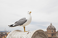 Italy, Rome, seagull on balustrade - GW003276