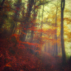 Autumn forest on a misty day - DWI000157