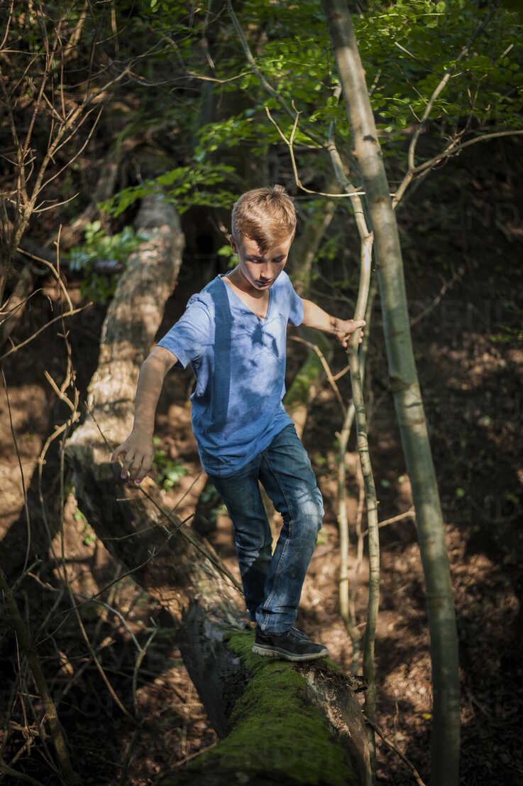 Boy balancing on a deadwood in the forest - PAF000875 - Andreas Pacek/Westend61
