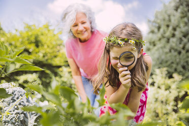 Germany, Northrhine Westphalia, Bornheim, Grandmother and granddaughter working in vegetable garden - MFF001196